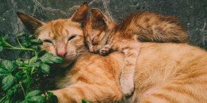 Artgerechte Katzen-Haltung