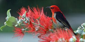 Artgerechte Vogel-Haltung