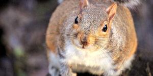 Hörnchenhausen – Auffangstation für Eichhörnchen in Dresden