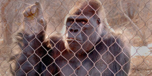 Zoo & Zirkus