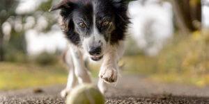 Artgerechte Hunde-Haltung