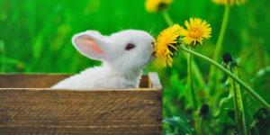 Artgerechte Kaninchen-Haltung