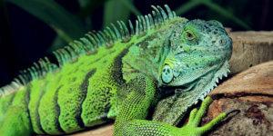 Artgerechte Reptilien-Haltung