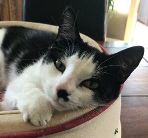 Katze aus Dresden-Nickern vermisst