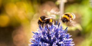Read more about the article Insekten helfen