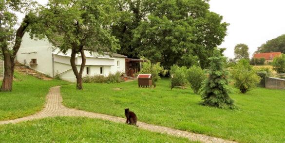 Maxen-Tierschutzverein-Dresden-12