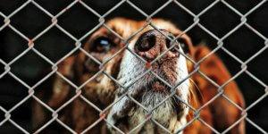 Tierheime, Tierschutzvereine, Zoogeschäft, Privatabgaben