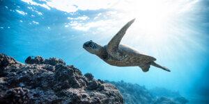 Read more about the article Meerestieren helfen